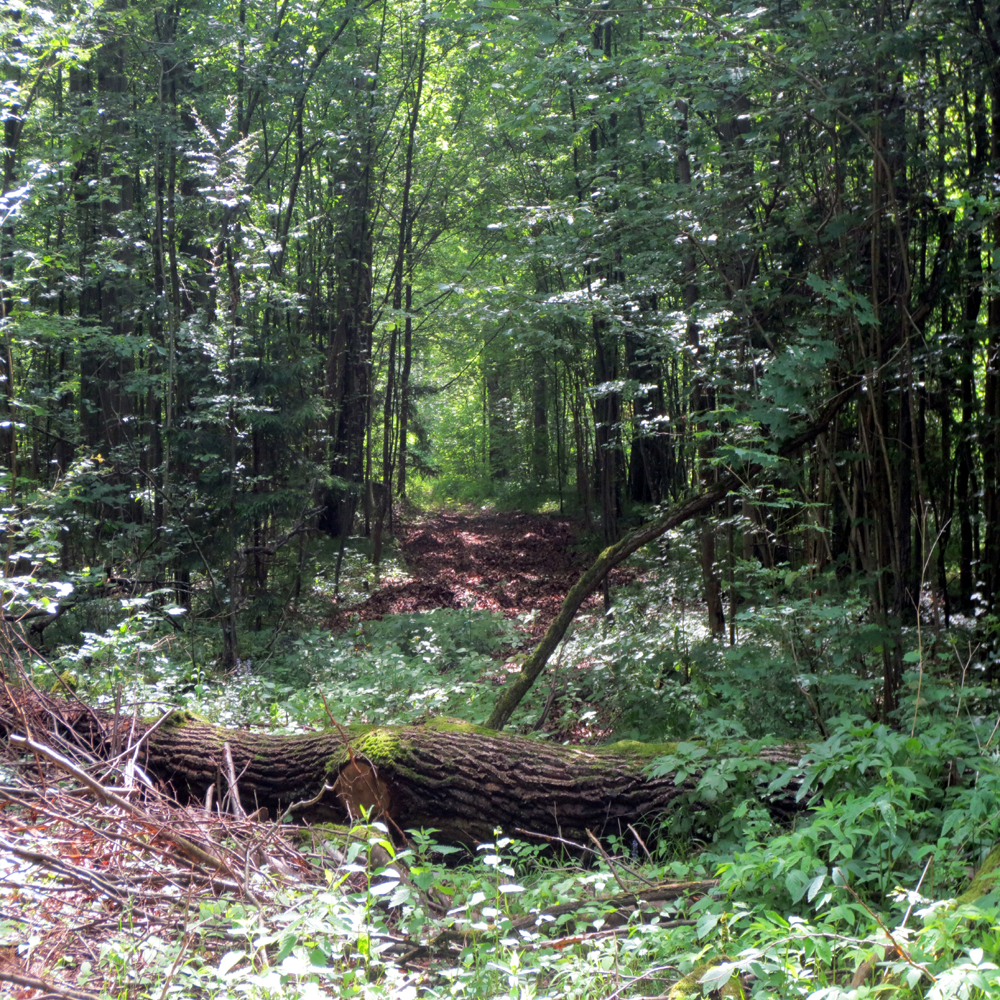 This is the all the remains of the road Von Stauffenberg hurried down after leaving the bomb